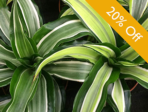 Houseplant Promotion  - Frensham