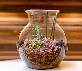 Masterclass - Bottle Garden with Succulents  - Long Ditton
