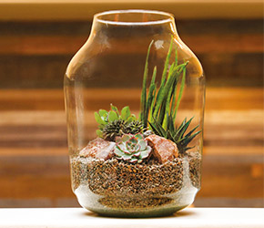 Masterclass - Bottle Garden with Succulents