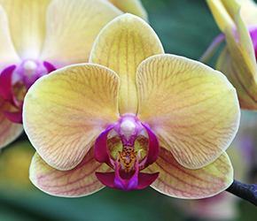 Orchid Talks  - Long Ditton